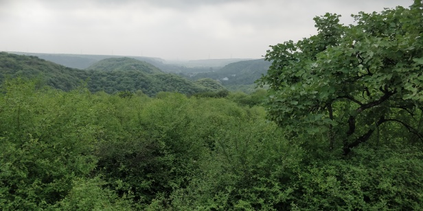 Lush green expanse of Mangarbani forest.jpg