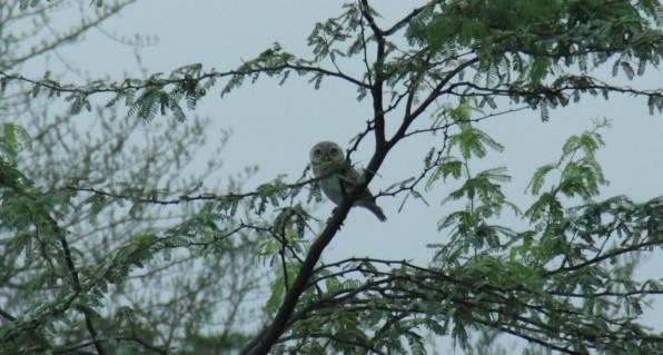 Owlette, Rahul Khera