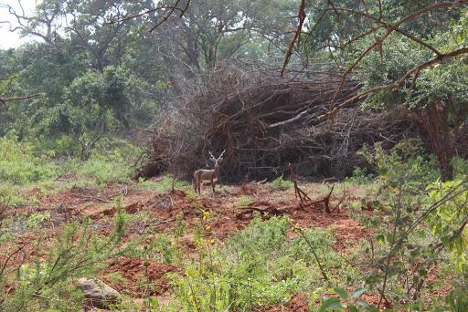 Invasive species 1